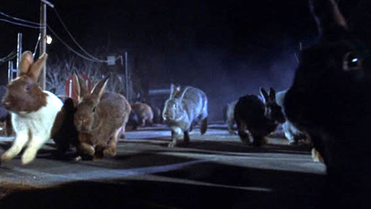 Night of the Lepus: 31 Days of Horror