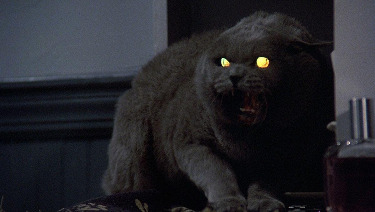 cat pet sematary 1989
